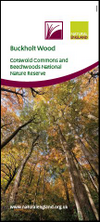 Buckholt Wood: Cotswold Commons and Beechwoods National Nature Reserve. (Thumbnail link to record)