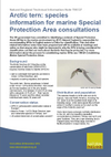 Arctic tern: species information for marine Special Protection Area consultations (Thumbnail link to record)