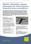 Balearic shearwater: species information for marine Special Protection Area consultations (Thumbnail link to record)