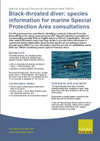 Black-throated diver: species information for marine Special Protection Area consultations (Thumbnail link to record)