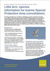 Little tern: species information for marine Special Protection Area consultations (Thumbnail link to record)