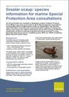 Greater scaup: species information for marine Special Protection Area consultations (Thumbnail link to record)