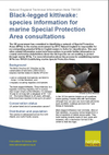 Black-legged kittiwake: species information for marine Special Protection Area consultations (Thumbnail link to record)