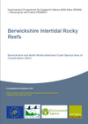 Berwickshire Intertidal Rocky Reefs (Thumbnail link to record)